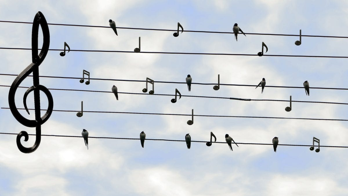 Birds and musical notes on telephone wires.