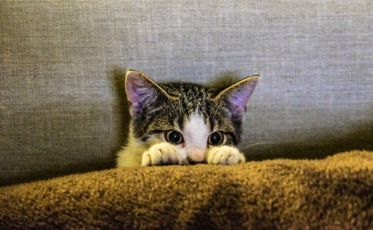 Kitten hiding.